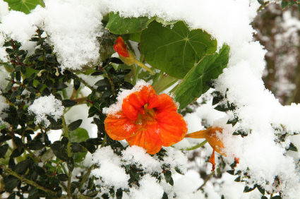iStock 000018690516XSmall How to Garden Over Winter: Key Strategies for Success
