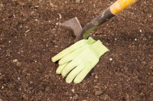 Garden Shovel and Gloves