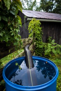 Collected rainwater