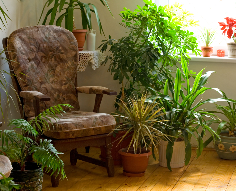 Use Plants to Clean VOCs From the Air in Your Home